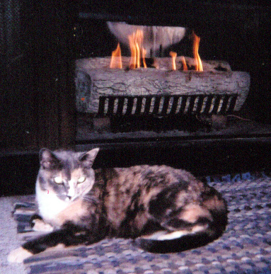 Tamba, Ina's 'Pawprints' star, by the fire
